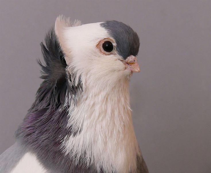 pigeon head study by purzli on deviantART