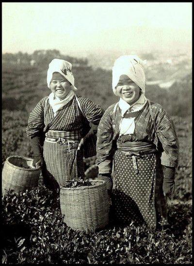 Tea pickers, Old Japan, by T. Enami