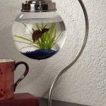 Hanging Fish Bowl.  Wonder if the fish know they are elevated and if they do...do they care?