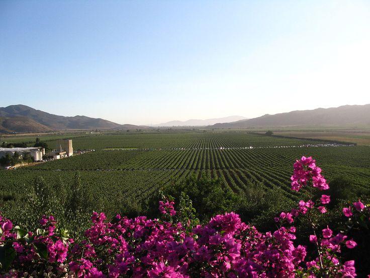 Recibirá Valle de Guadalupe agua tratada de la CNA