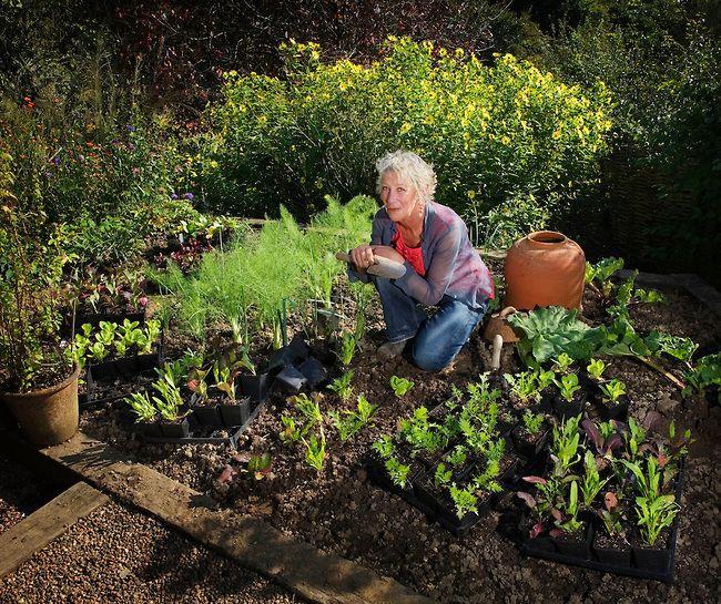 66 Best Carol Kleins Cottage Garden Images On Pinterest