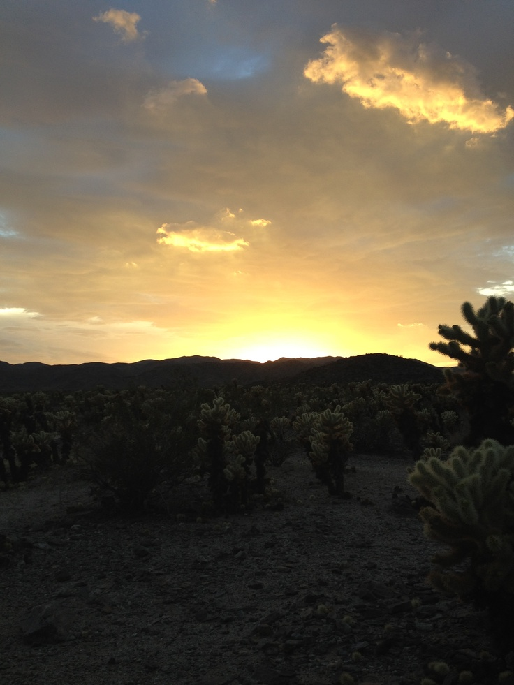 Watched our last sunset in Joshua Tree National Park and then stayed until it was almost pitch black.