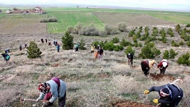 Suvermez Köyünde ağaçlandırma çalışmaları