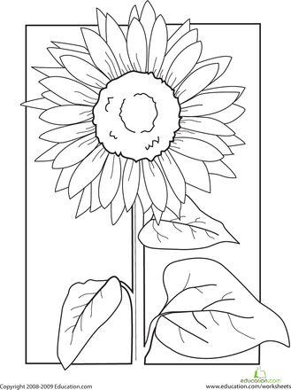 color the sunflower kindergarten sunflower coloring pages sunflower quilts flower doodles. Black Bedroom Furniture Sets. Home Design Ideas