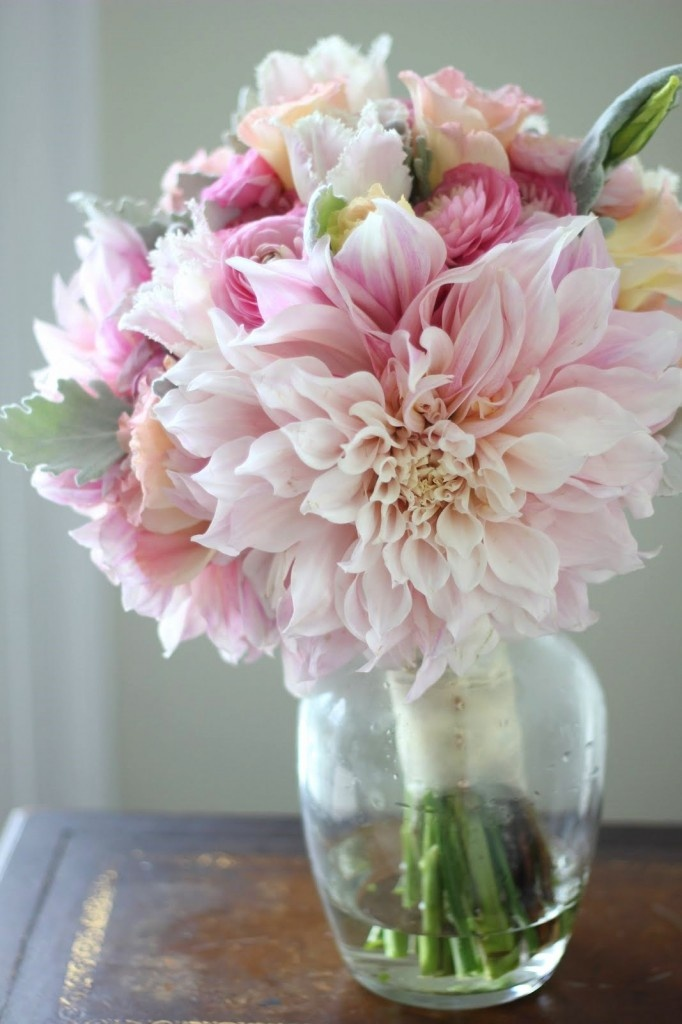Bridal bouquet of cafe au lait dahlias, dusty miller, pink ranunculus, light pink lisianthus, silver brunia berries, and pale pink and white fringed tulips