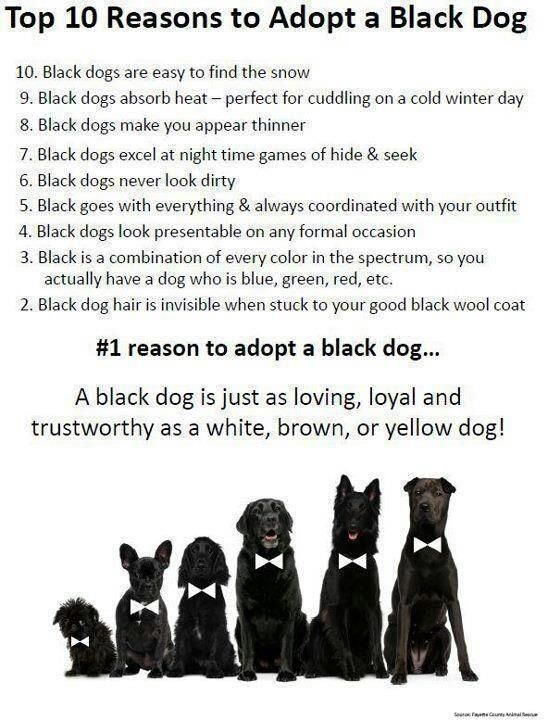 Black dogs are the hardest to find homes for. Adopt a black dog! I don't know why this would be the case, black dogs rule!!! Thanks Ash! :)