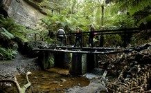 Glow Worm Walk near Lithgow.