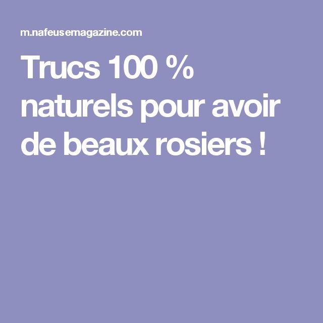 Trucs 100 % naturels pour avoir de beaux rosiers !