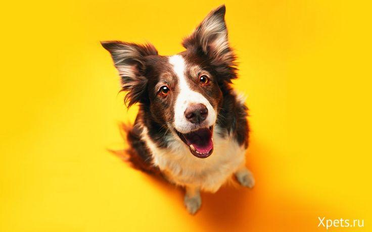 Как отучить собаку при приветствии прыгать на хозяина?
