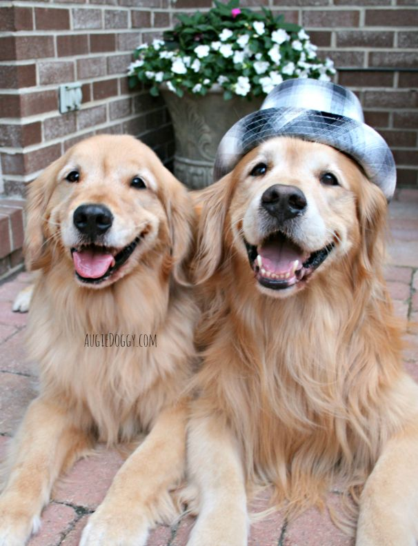 Two Happy Boys Goldenretriever With Images Golden Retriever