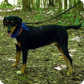 Humane Society Dog Named Bandit For Adoption