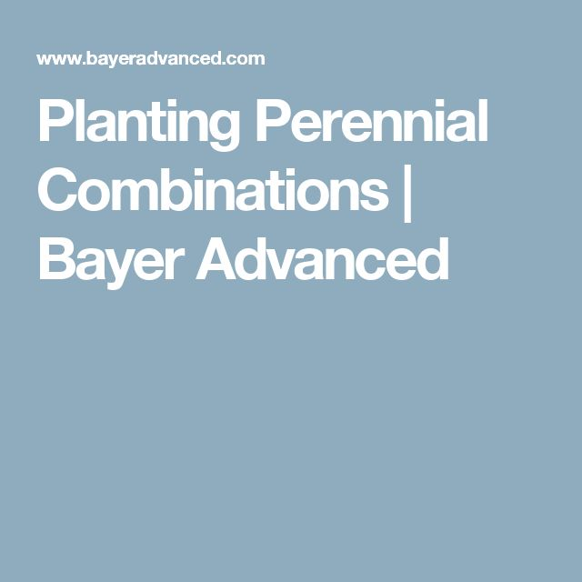 Planting Perennial Combinations | Bayer Advanced