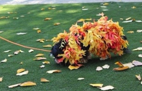 Top 10 Probably Homemade Worse Dog Costumes of All Time Roll dog in mud, roll dog in leaves, costume done! #dogs #costume #homemade