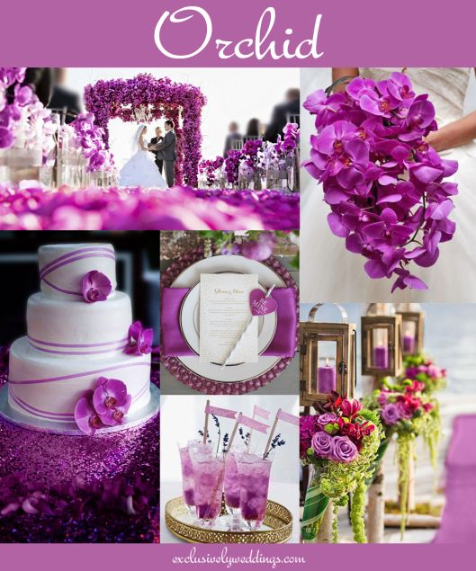 "Orchid Wedding ""Your Wedding Color - Don't Overlook Five Luscious Shades of Purple"". Read more: http://blog.exclusivelyweddings.com/2014/04/20/your-wedding-color-dont-overlook-five-luscious-shades-of-purple/"