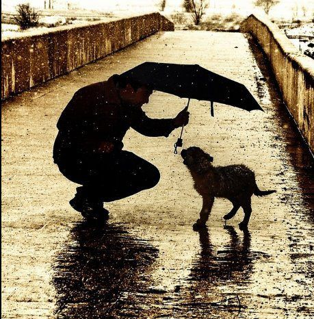 kindness to animals is one of the best things in the world.