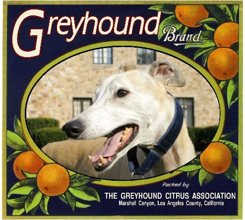 Marshall Canyon Greyhound Puppy Dog Orange Citrus Fruit Crate Box Label Art Print. $9.99, via Etsy.