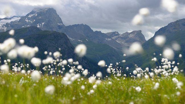 paysage suisse - Recherche Google