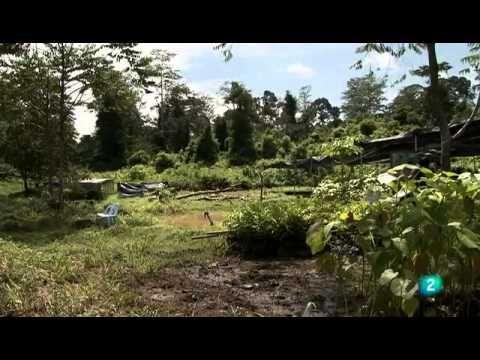 Grandes documentales   El corazón de Borneo,