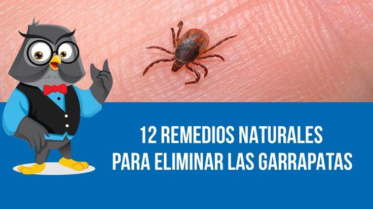 23 best images about salud de las mascotas on - Acabar con las pulgas en casa ...