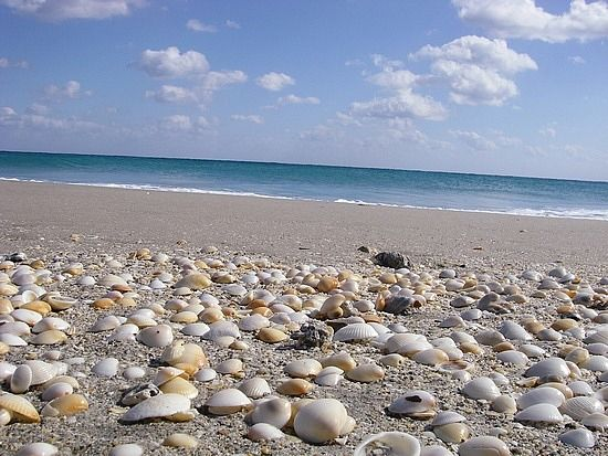 ontdekdoos schelpen (reserveren bij natuur & en zo)