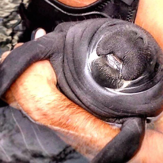 Our little #manatee is growing up!  #acquariodigenova #AcquarioVillage #lovenature  #love_nature #love_genova #aquarium #Genoa #travel #leisure #tempolibero #viaggi #famiglia #weekend #GenovaMoreThanThis #animallovers #photooftheday  #lamantin #manatí #Seekuh #ламантин