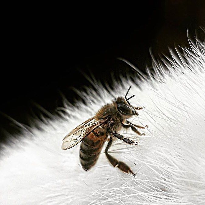 In honour of #piday we have a nerdy #beefact for you! Bees know that the world is round AND they have the ability to calculate angles! They were only a few million years ahead of Pythagoras... #math #savethebees #pi #3.14 #bkn pc: @kaylawelcher Re-post by Hold With Hope