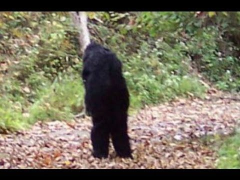 The Government Cover-Up of Bigfoot Documentary http://www.tsu.co/NGMMagazine