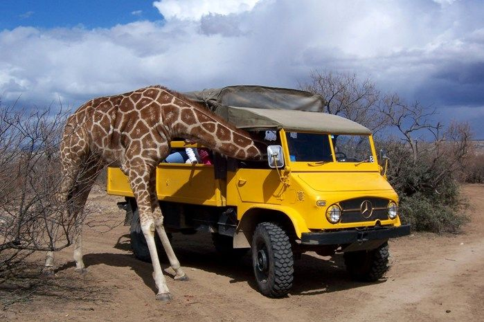 If you ever wanted to get up close and personal with exotic animals, you have to visit this Arizona wildlife sanctuary.