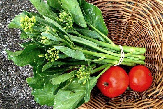 Kai-lan Chinese broccoli Chinese Kale 200 seeds by SmartSeeds