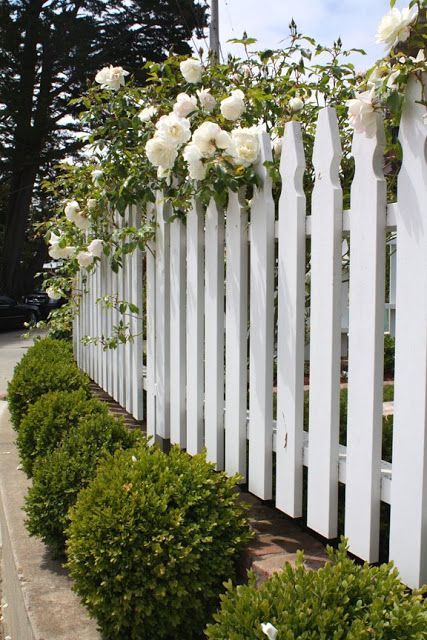 Picket fence, boxwood and roses.  This is so gorgeous, Not sure its entirely in keeping with my hamptons feel but its so beautiful, maybe cut off pickets instead of the fancy picket ends?