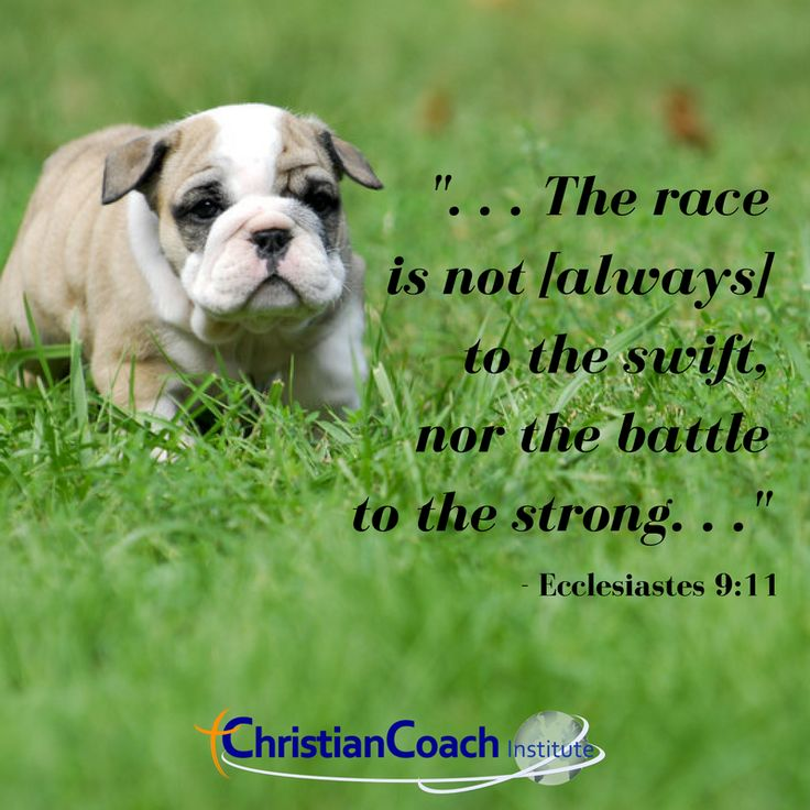 """""""... the race is not [always] to the swift, nor the battle to the strong..."""" Ecclesiastes 9:11"""