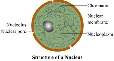 Nucleus Physio rabbi Pinterest