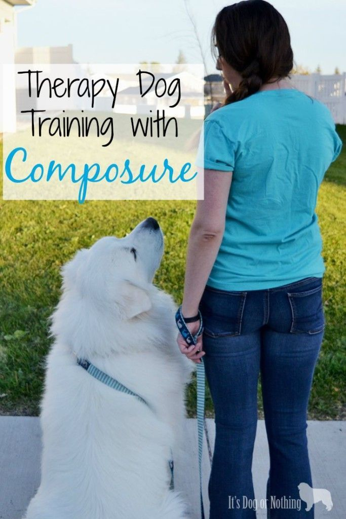 how to train your dog to be a therapy dog