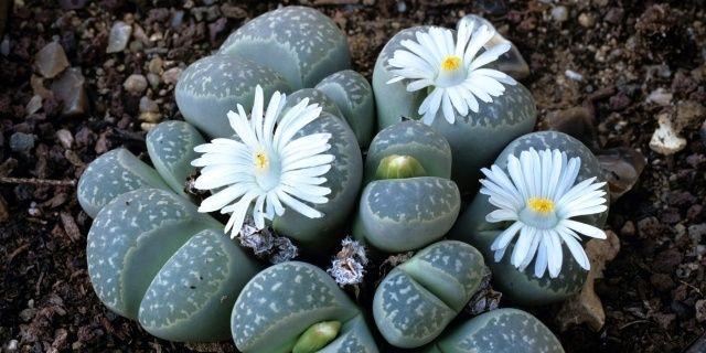 Pokojové rostliny, které vás uklidní