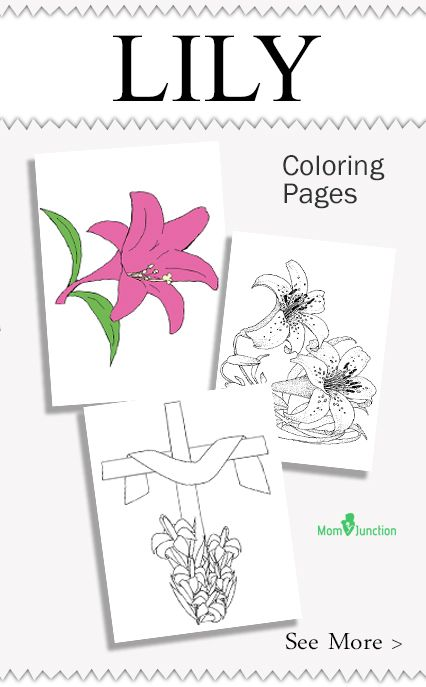 Lily Coloring Pages