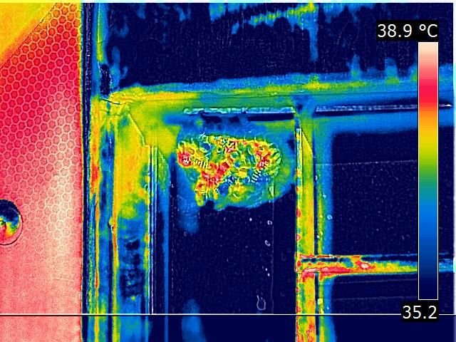 Termografia: Thermography of Bee
