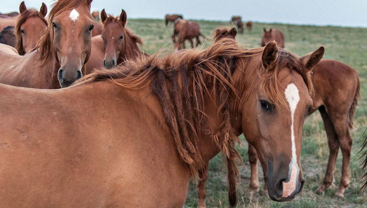Feral horses, descendant from the Budyonny, on a large island in Manych Lake in the Rostov district. Russia. мустанг - Самое интересное в блогах