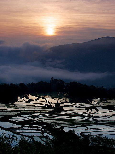 cascading rice field terrace