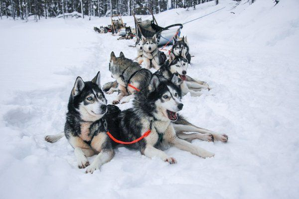 Husky safari.   #husky #dogs #winter #outdoor #outdooractivity