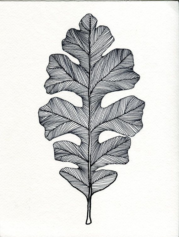 English Oak Leaf Print of original Pen and Ink by Bigbrainart, $22.00
