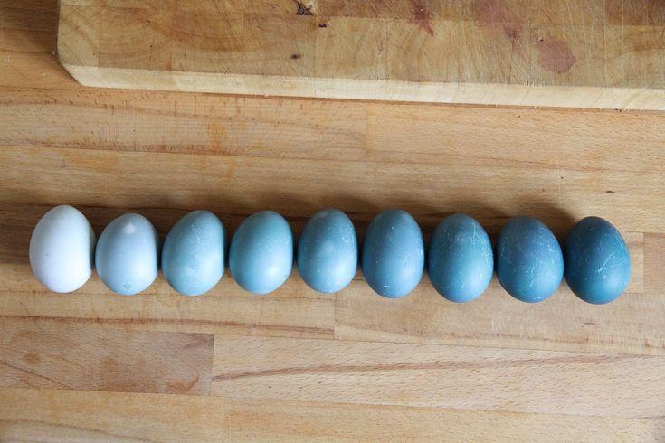 isipopisi: Blaue Eier, mit Rotkohl gefärbt