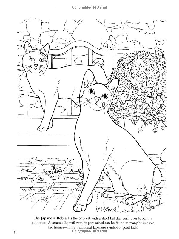 The Cat Lovers Coloring Book Dover Nature Ruth Soffer