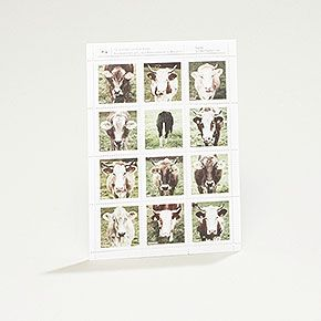 Bildermarken Kuh für tierische Briefe