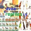 Esta comunidad especial para estos tipos de animales   Aves,reptiles,y mamiferos  si eres nuevo lee el protocolo