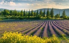 Обои цветы, пейзаж, природа, лаванда, поле, небо, фиолетовые цветы, весна