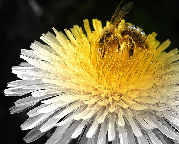 The Nature around Us by Edit Hodásziné, via Behance