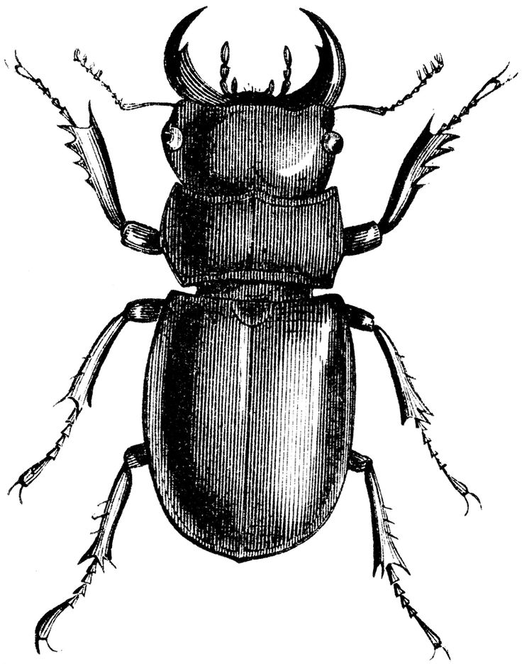 Line Drawing Insects : Best images about draw on pinterest gentleman