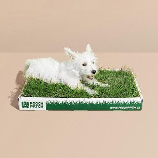 Dog potty litter box is a convenient way to take care of your dog's needs. It helps in developing certain habits which can come out as a routine so that you do not have to worry about your carpets anymore.