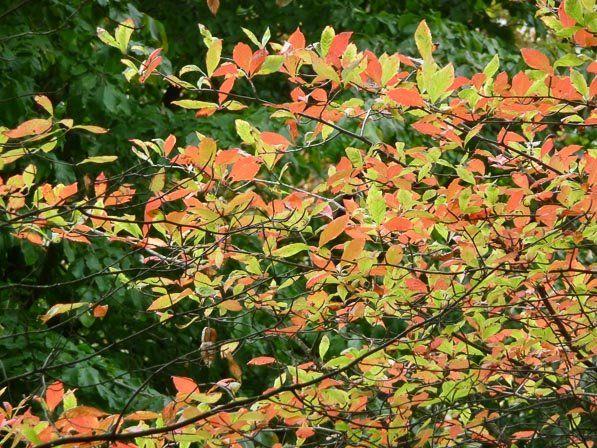 Signes d'automne http://www.pariscotejardin.fr/2014/10/signes-d-automne/