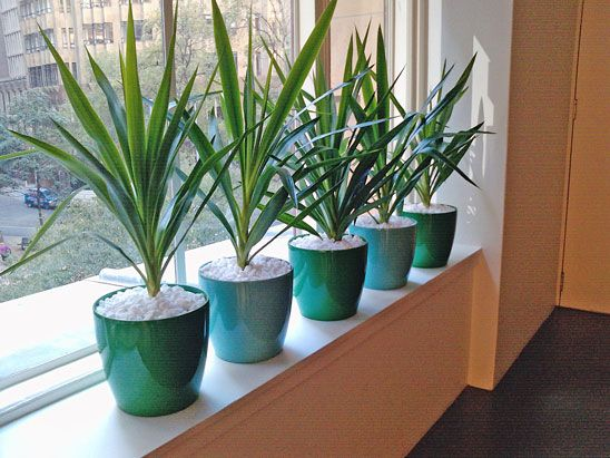 office flower pots. office window sills no longer need to be boring bring the outside in with plants flower pots